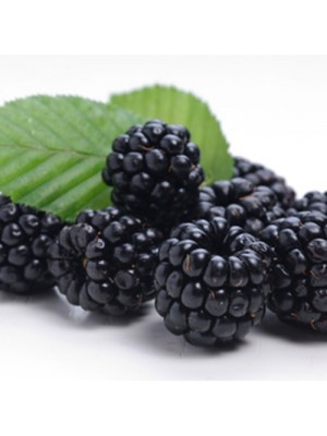 Novo eJuice Blackberry E-Liquid