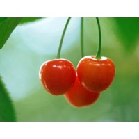 Novo eJuice Cherry E-Liquid